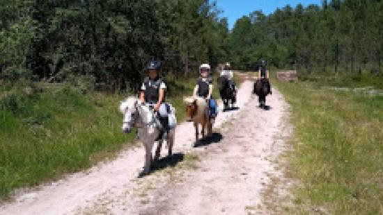 Balade mini poneys 800x450